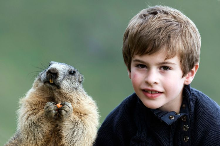 Дружба австрийского мальчика с сурками — Фото №1