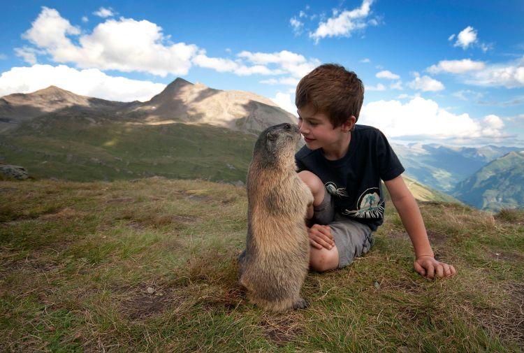 Дружба австрийского мальчика с сурками — Фото №2