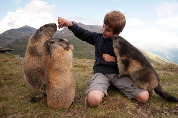 Дружба австрийского мальчика с сурками — Фото №4