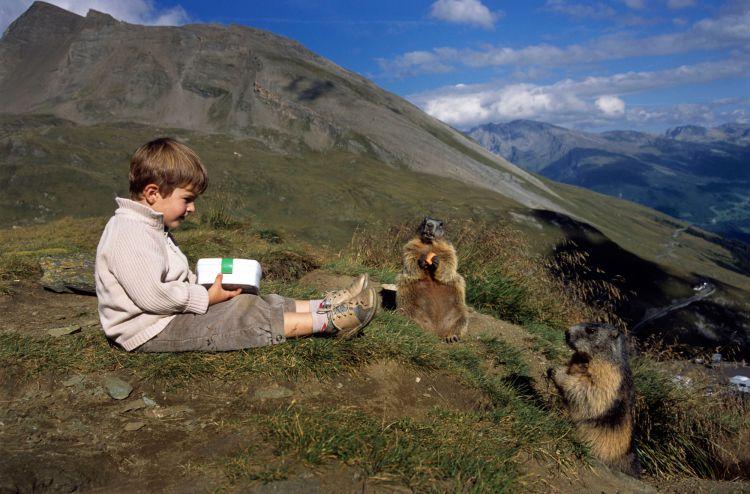 Дружба австрийского мальчика с сурками — Фото №6