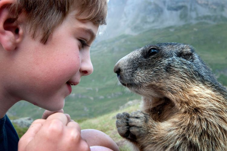 Дружба австрийского мальчика с сурками — Фото №7
