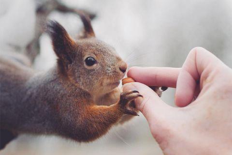 Фотограф, который дружит с дикими животными