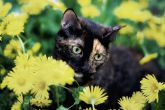 Лето кошки Кейт, или почему стоит путешествовать вместе