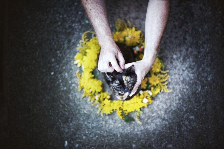 Лето с котом — Фото №1