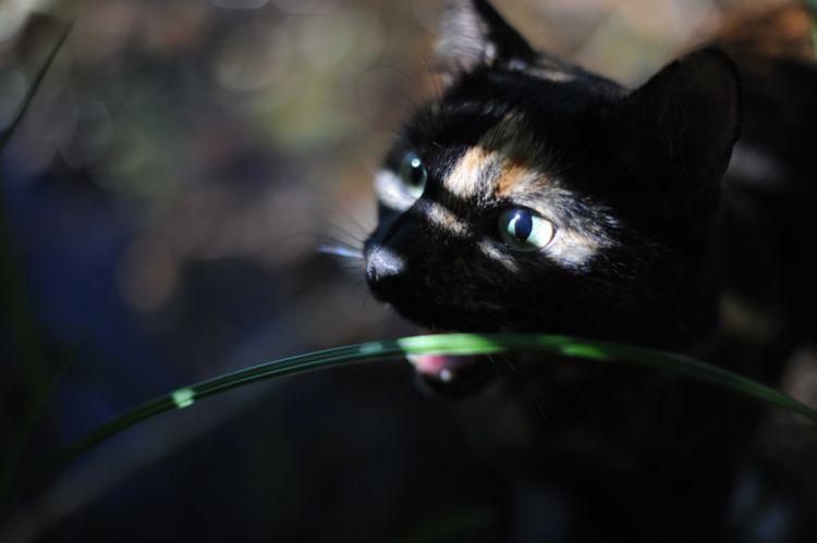 Лето с котом — Фото №10