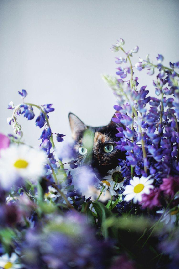 Лето с котом — Фото №11
