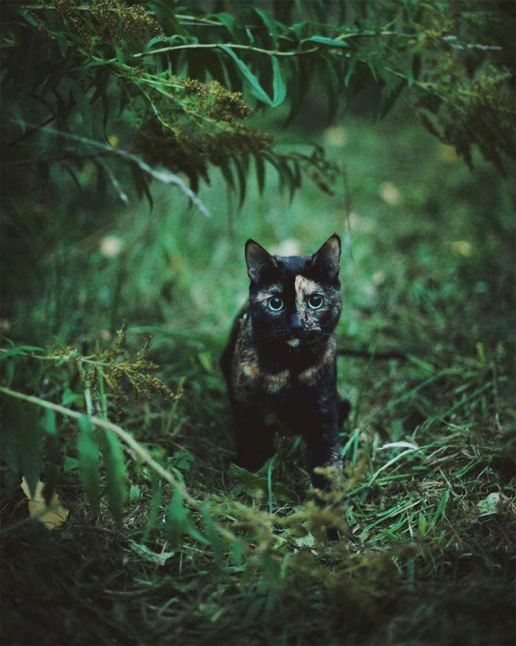 Лето с котом — Фото №12