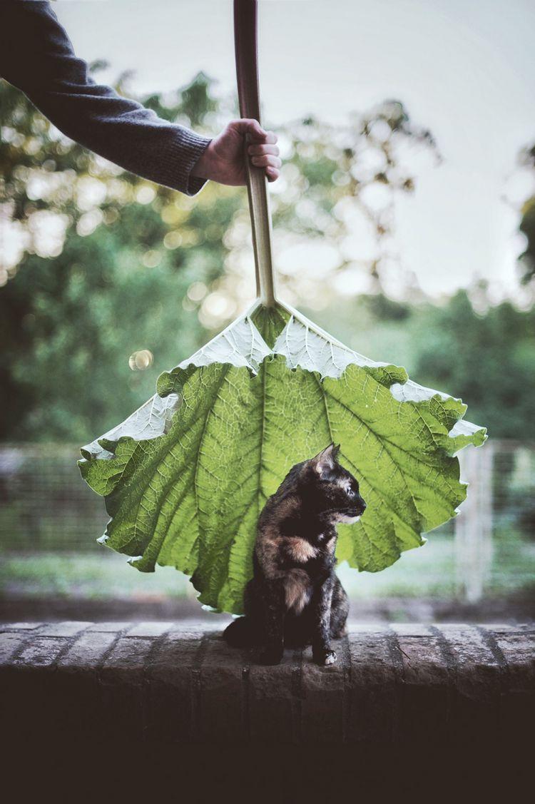Лето с котом — Фото №14