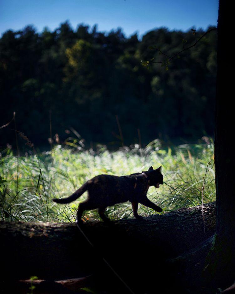 Лето с котом — Фото №16