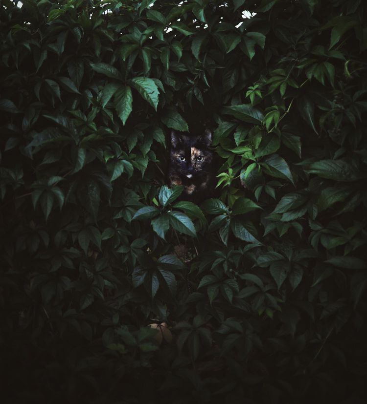 Лето с котом — Фото №17