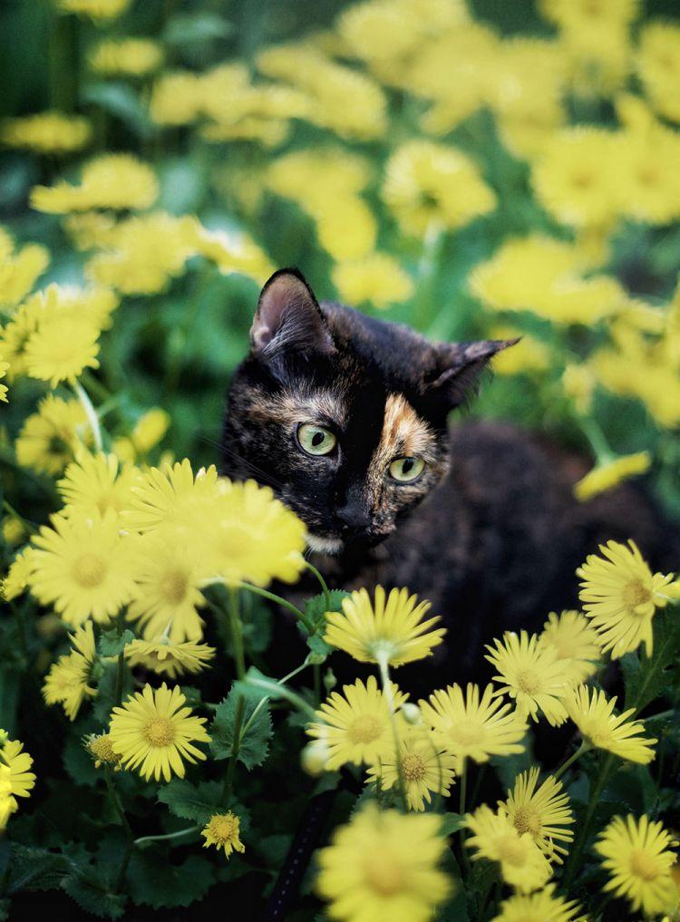 Лето с котом — Фото №2