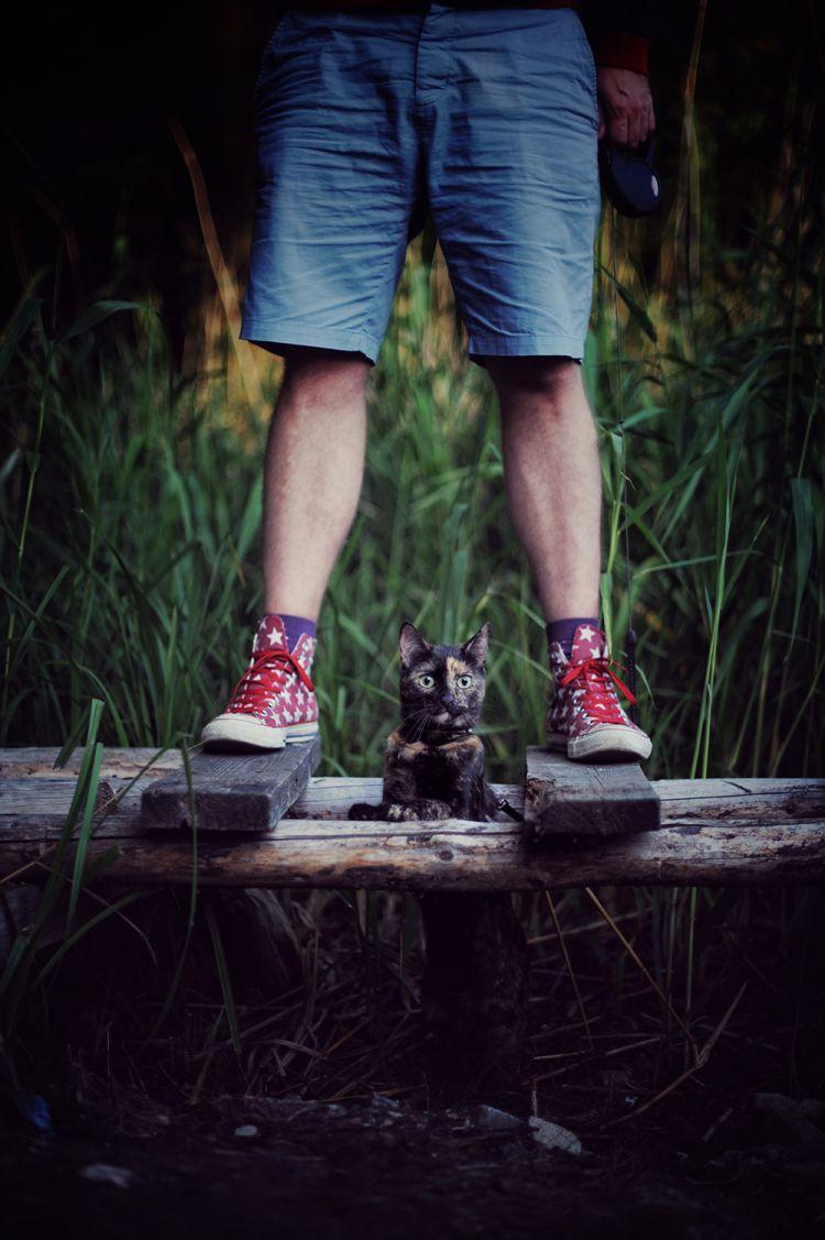 Лето с котом — Фото №5