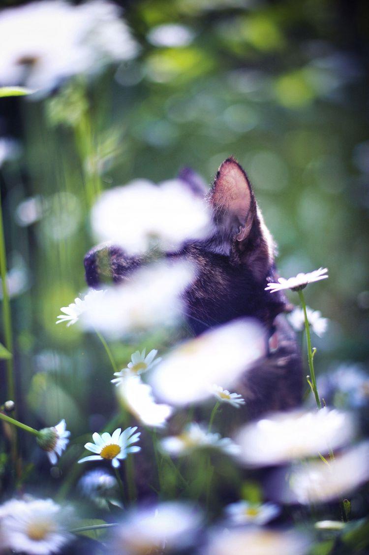 Лето с котом — Фото №7