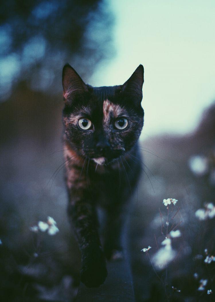 Лето с котом — Фото №8