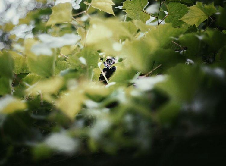 Лето с котом — Фото №9