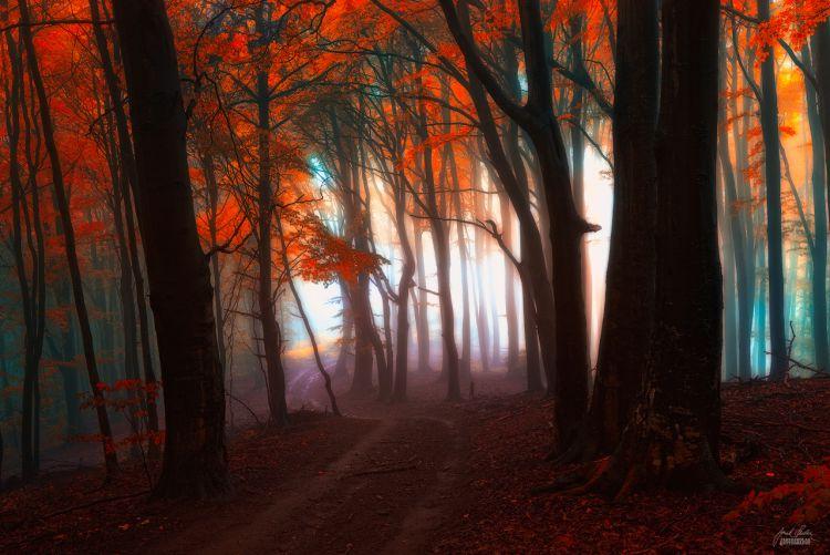 Астральное путешествие через лес