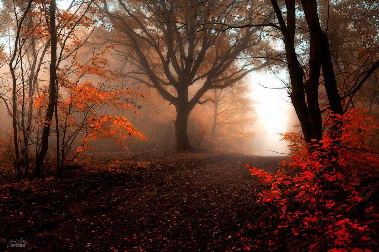 Незнакомец в тумане