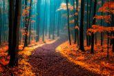 Сюрреализм и буйство красок осенних лесов Чехии