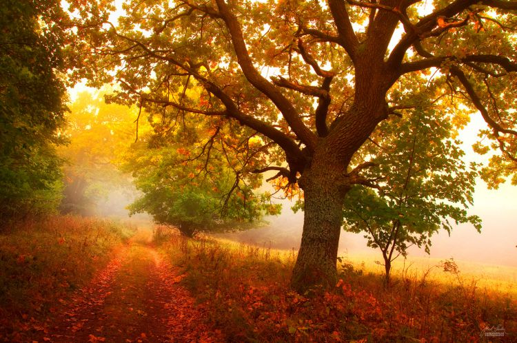 Осенняя медитация