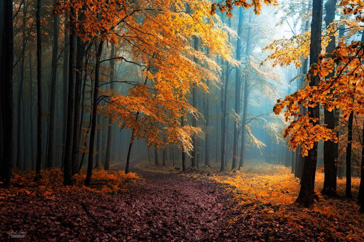 Украшенный листьями деревьев