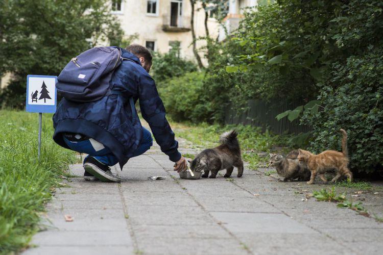 Знак «Коты»