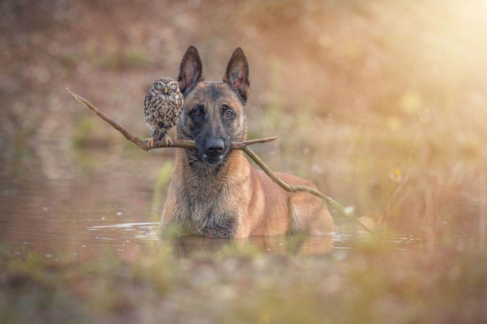Овчарка Инго и сова Польди