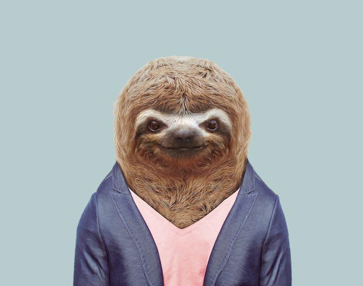 Бурогорлый ленивец