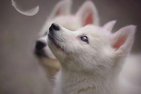 20 потрясающих портретов собак