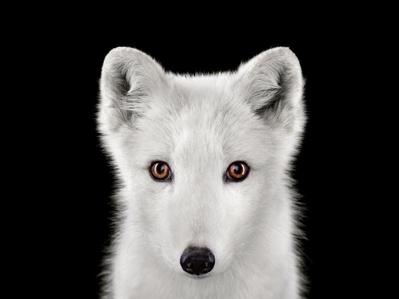 Выразительные портреты диких животных