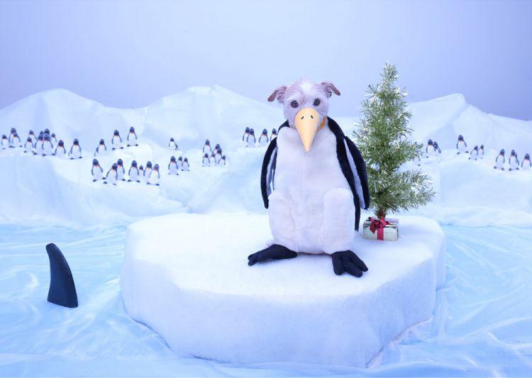 Рождественские превращения очаровательной собачки