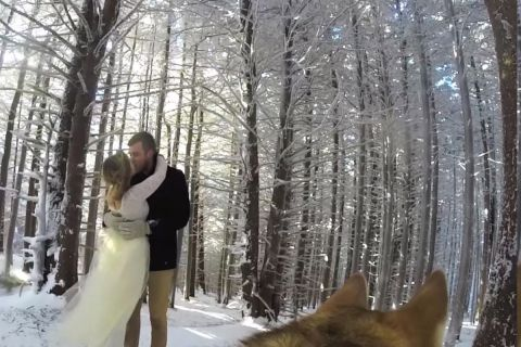 Собака как видеооператор на свадьбе