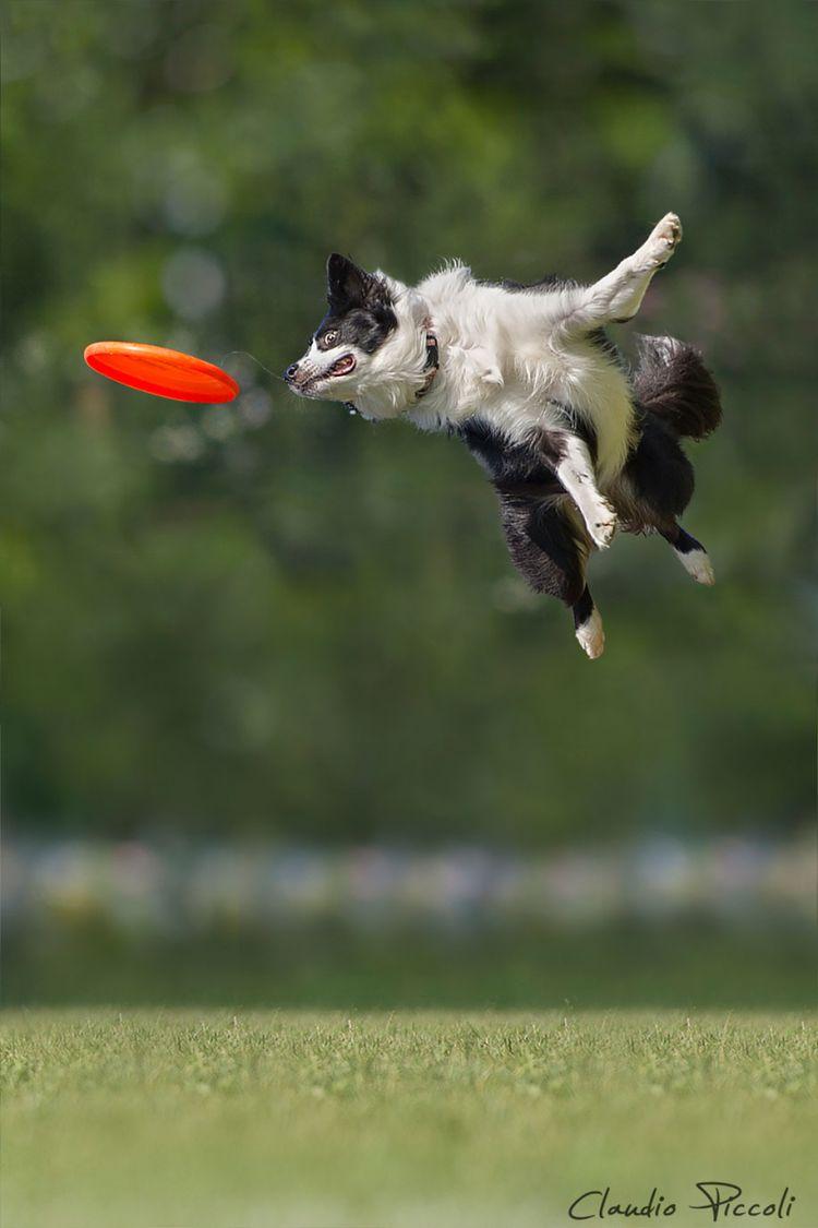 Собаки, которые умеют летать