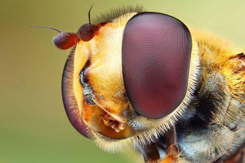 25 макропортретов насекомых