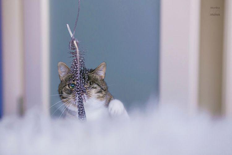 «Всё ещё кошка» — фотографии кошек, переживших травму