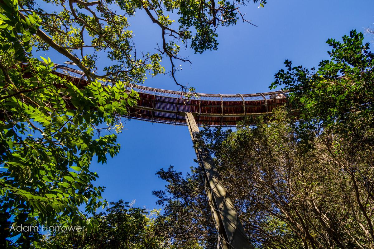 Прогулка по кронам деревьев
