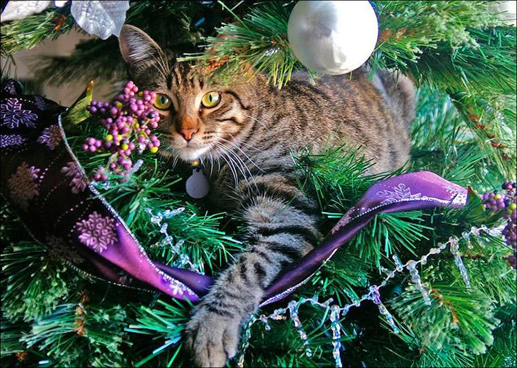 Коты и кошки как ёлочные украшения