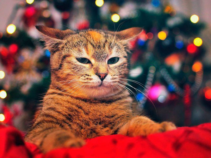Кошки, знающие толк в украшении ёлки