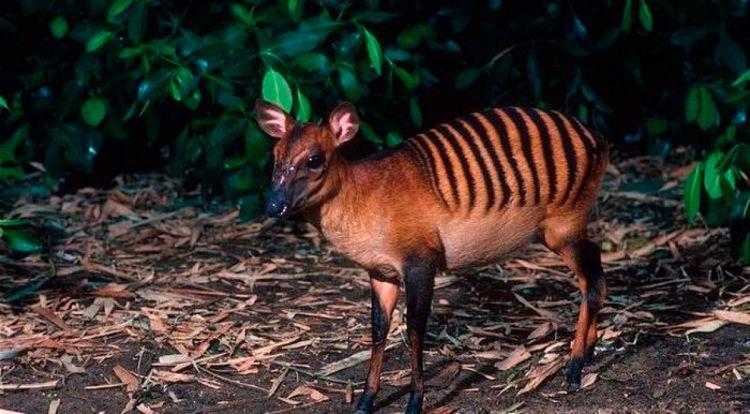 20 животных, о существовании которых вы могли не знать