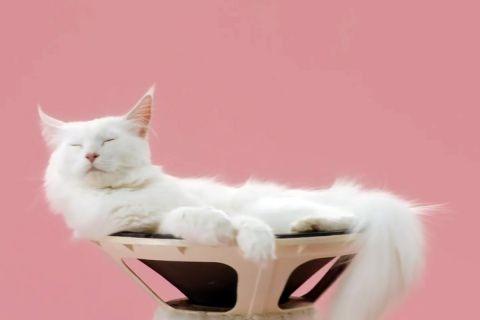 Пожалуй, лучший музыкальный клип с котиками