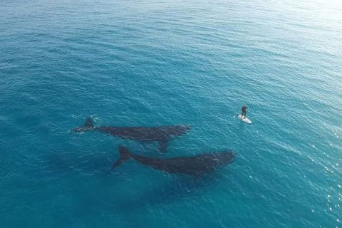 Завораживающее видео о китах, заинтересовавшихся серфером