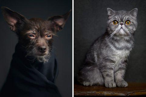 Эмоциональные портреты животных Винсента Лагранжа