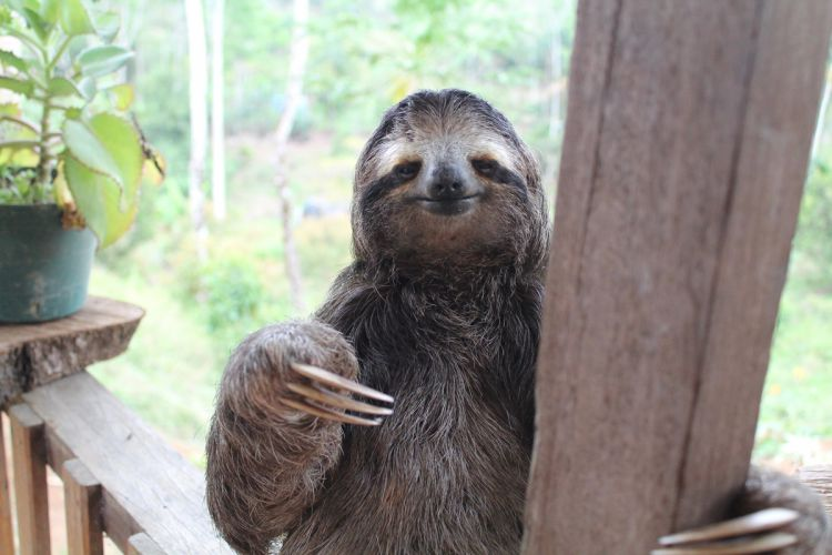 20 фотографий обаятельных ленивцев