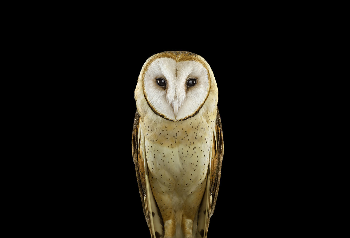 Хранители мудрости, или Мистическая красота сов