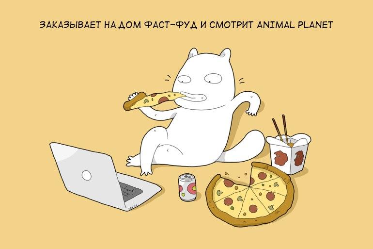 Что происходит, когда кот остаётся один