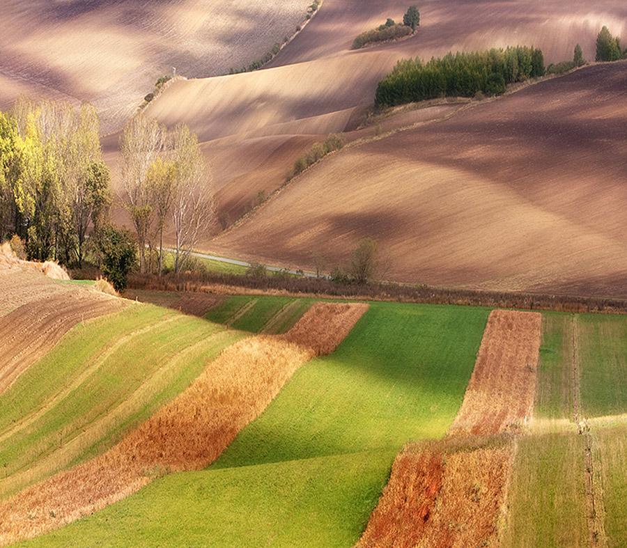 Гипнотическая красота полей Моравии