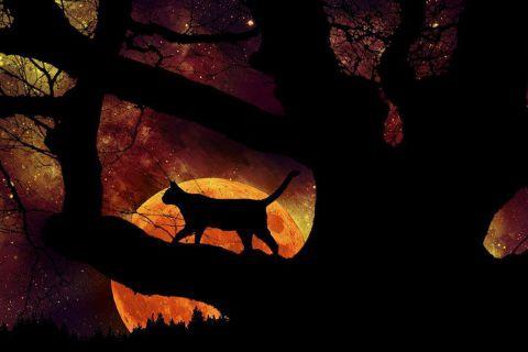 Кот и луна