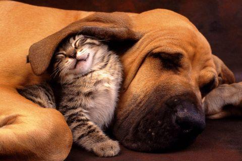 Рассказ о настоящей дружбе между псом и котенком