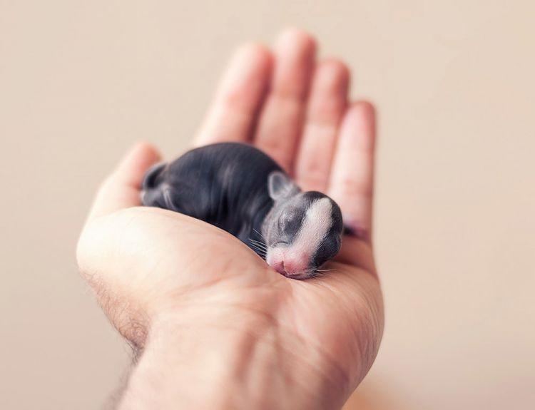 30 первых дней жизни кролика