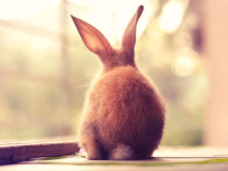 Кролики — любимые модели фотографа