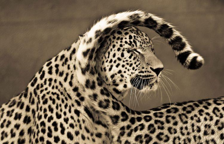 Эмоции и чувства больших кошек в фотографиях